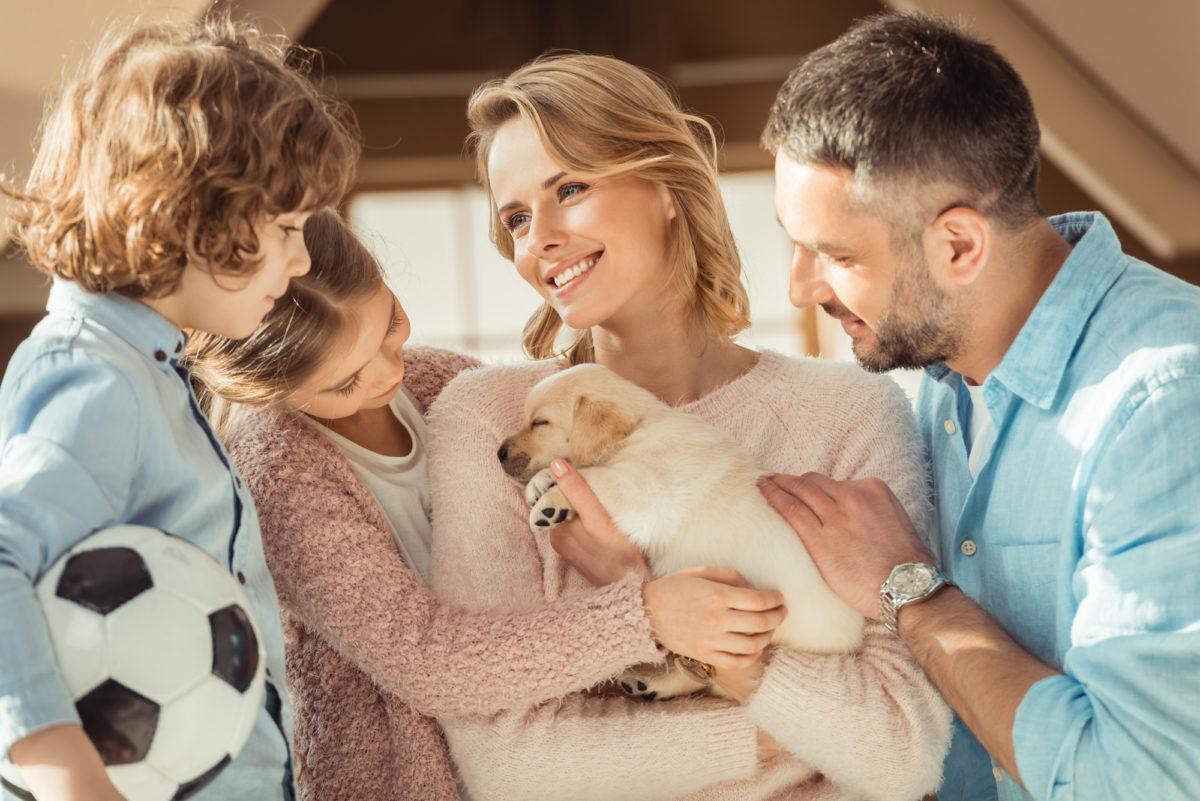 Beregn hvad din hund koster om året